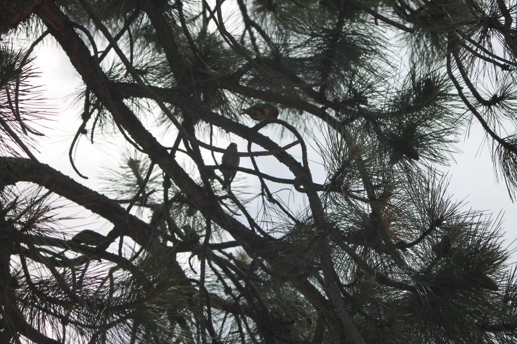 birdsdakota